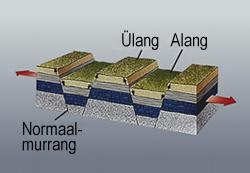 Alang_ylang