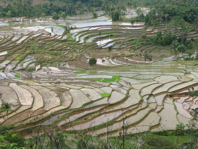 Hiina riisipõllud.