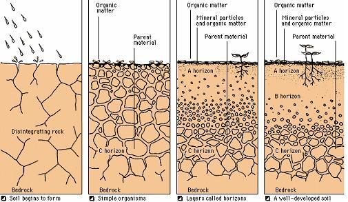soil_is_formed