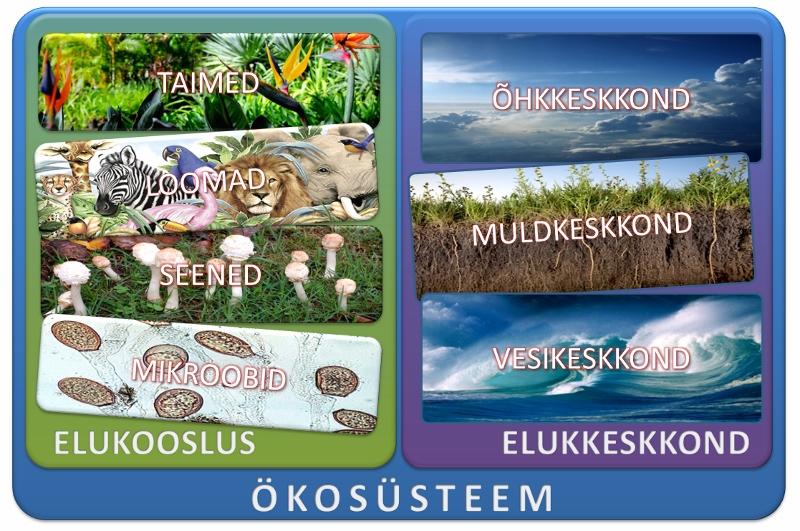 Ökosüsteemi moodustavad eluskooslus ja tema elukeskkond.