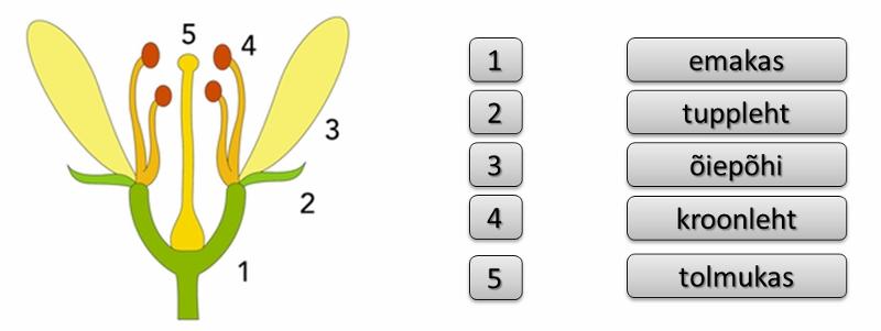 H1 (800x301)