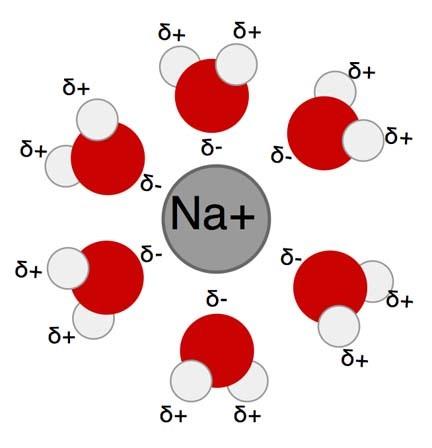 Hüdraatunud naatriumi ioon