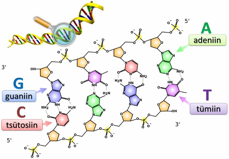 DNA sidemed