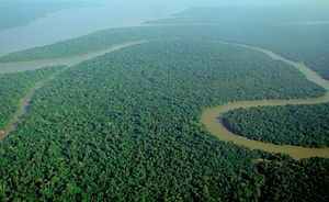 Amazonase vihmametsad – vihmametsades toimub peamiselt hapniku taastootmine Maal