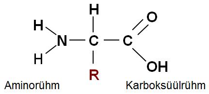 Aminohappe üldvalem. Erinevaid radikaale (R) on 20.