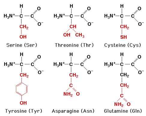 Kuue sagedamini esineva aminohappemolekuli struktuurvalemid.
