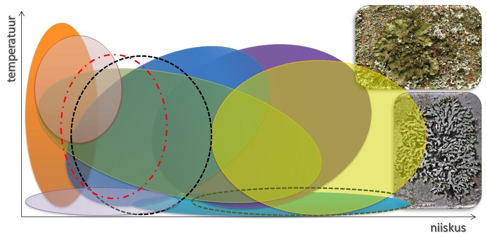 Erinevatel samblikuliikidel on erinev ökoamplituud