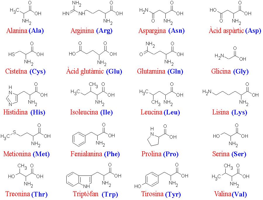 Aminohapped inimese organismis