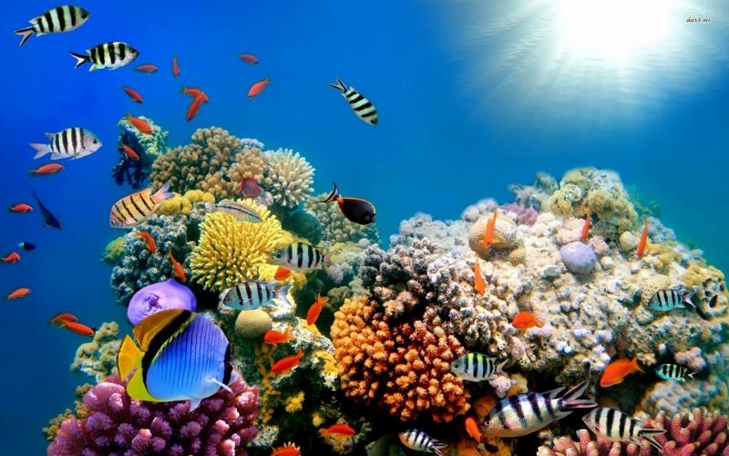 Korallide elurikkus