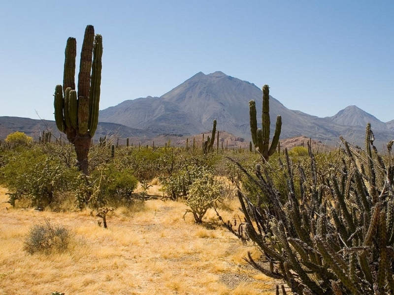 cactus-plants (800x600)