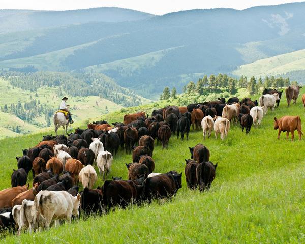 Mägirahvad karjatavad loomi