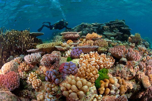 Sealsed korallid
