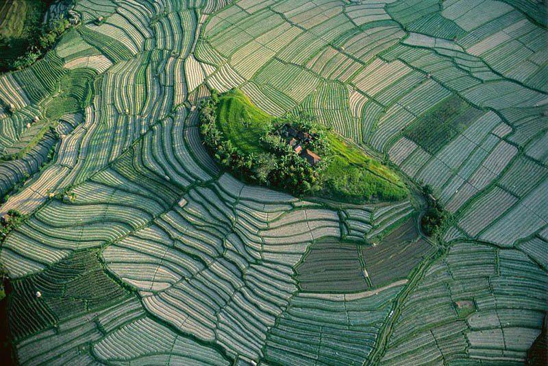 Riisikasvatuse alad