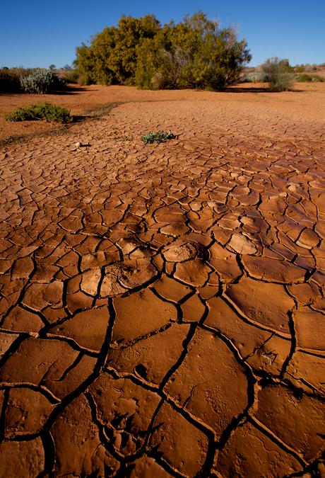 Heat - dought - unfertile soil