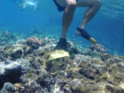 Snorgeldaja seisab korallide peal