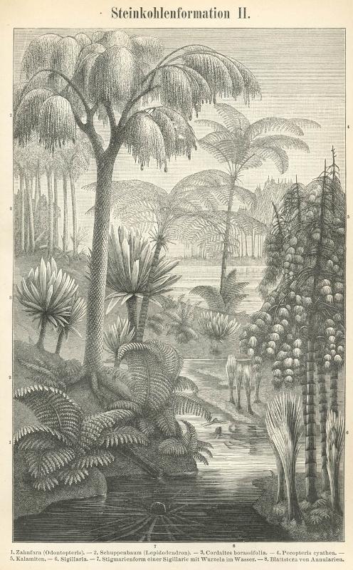Hiigelsõnajalgade metsad