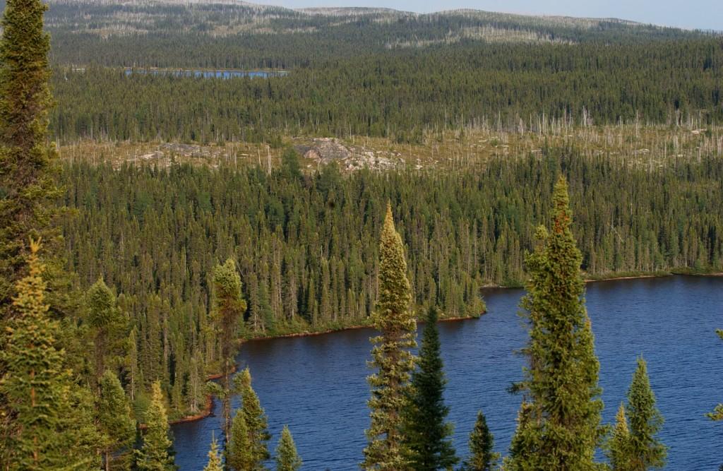 Taiga_Landscape_in_Canada
