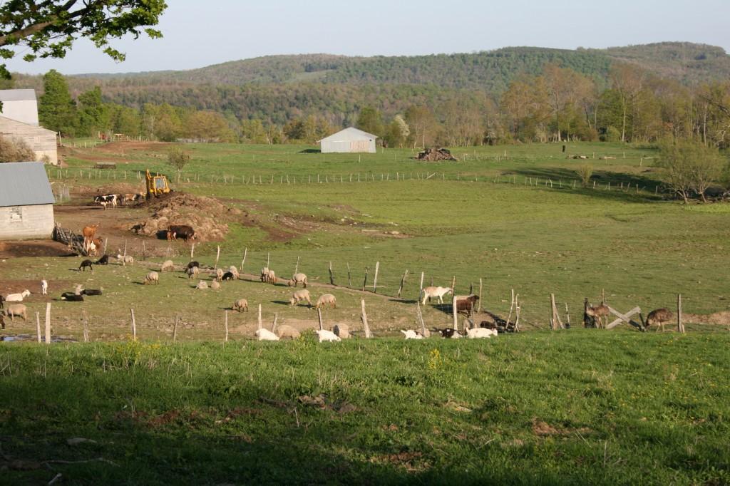 barnyard-nectar-hills-farm