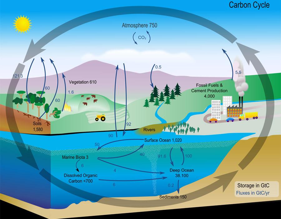 carbon_cycle_diagram_nasa_900x700