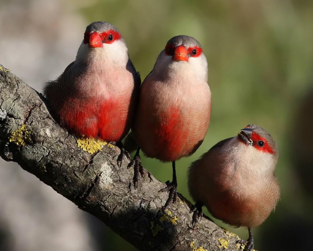 Linnud3