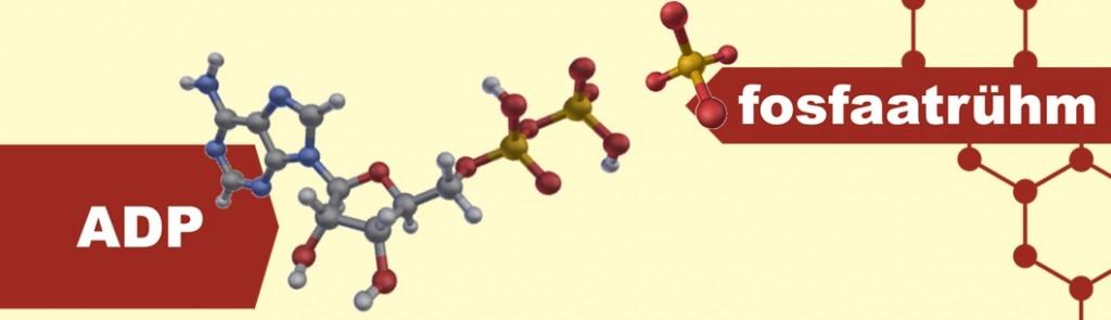 ADP ja fosfaatrühm