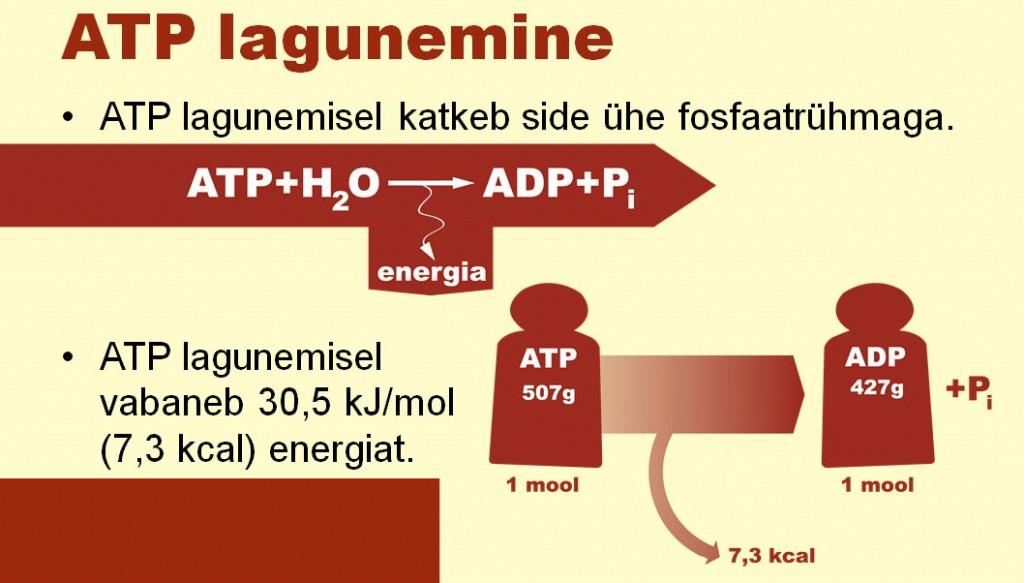 ATP lagunemine