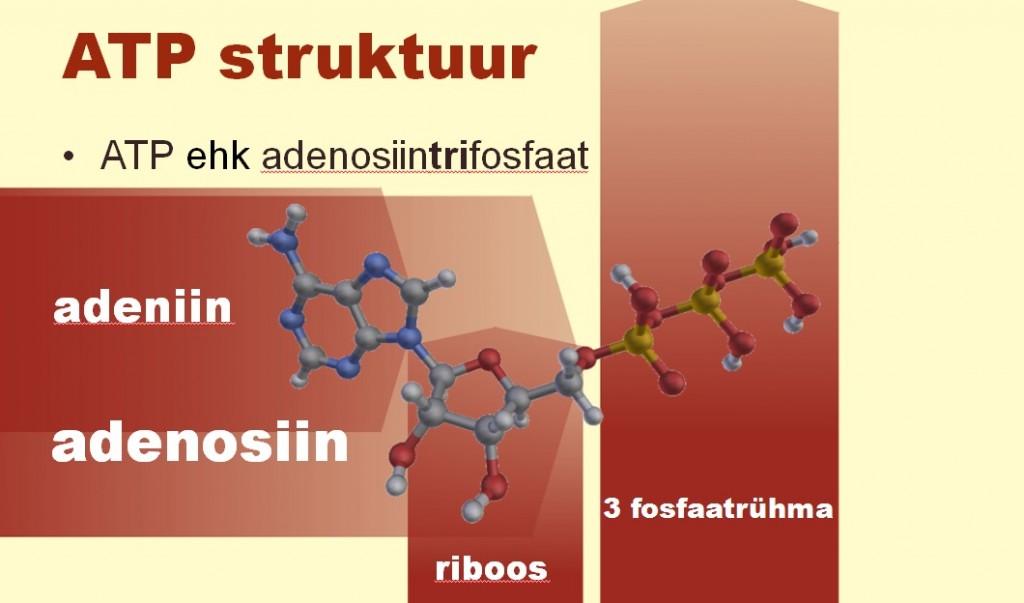 ATP struktuur
