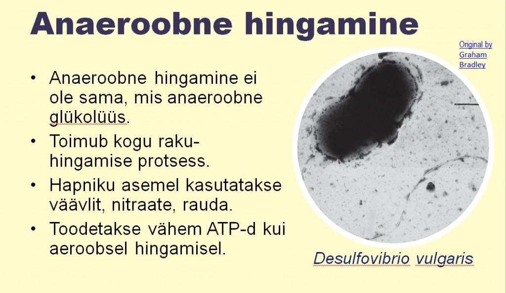 Aeroobsed ja Anaeroobsed4